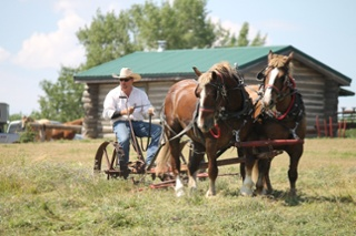 belgian-horses-1214502_1280.jpg