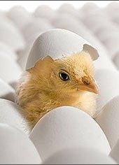 Google Medic Egg Incubator