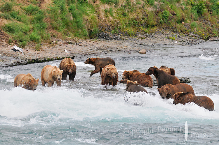 Image result for group of bears