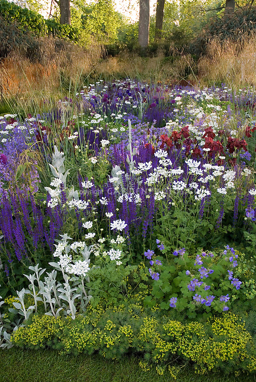 purple and white color themed perennial