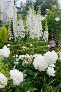 df017489_white-flower-garden-photo.jpg ...