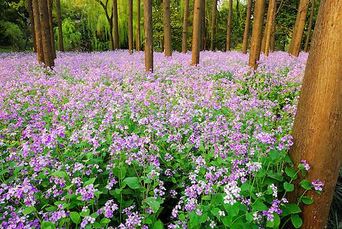 Wild wood nature flower
