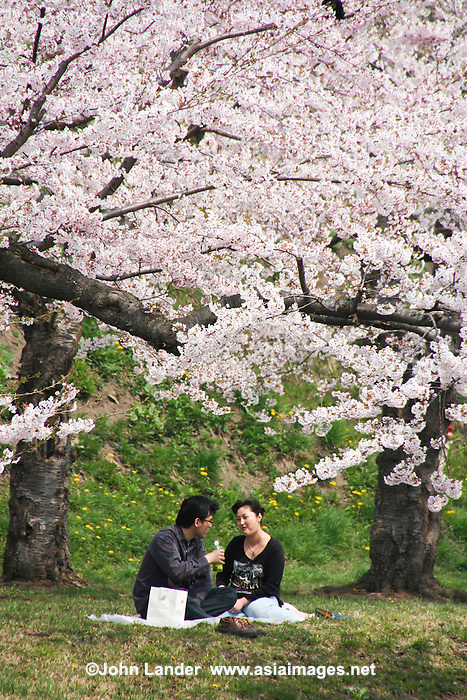 25 Romantic Couples Under Japanese Cherry Blossoms