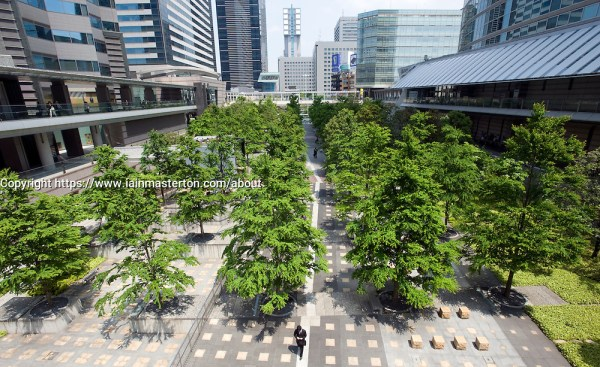 modern urban landscaping with trees