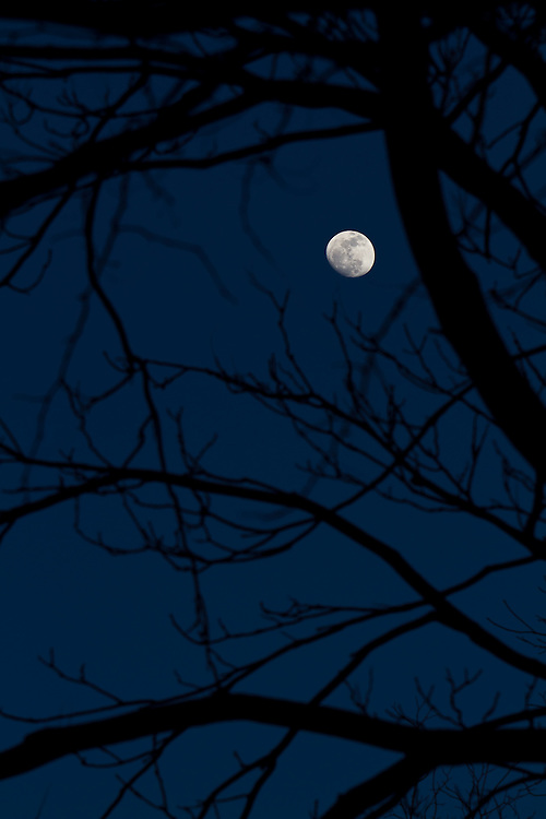 Image result for moon through trees photography