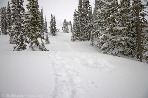 snowshoe tracks paradise mount