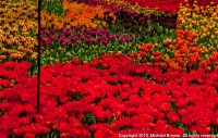 The gallery for --> Switzerland Flowers
