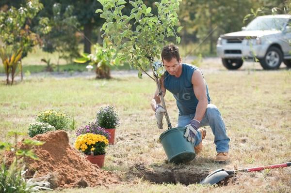 man planting tree rob lang