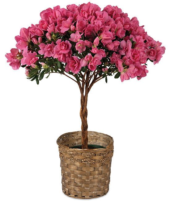 Best of Calyx Monthly Gift Program  Calyx Flowers Inc