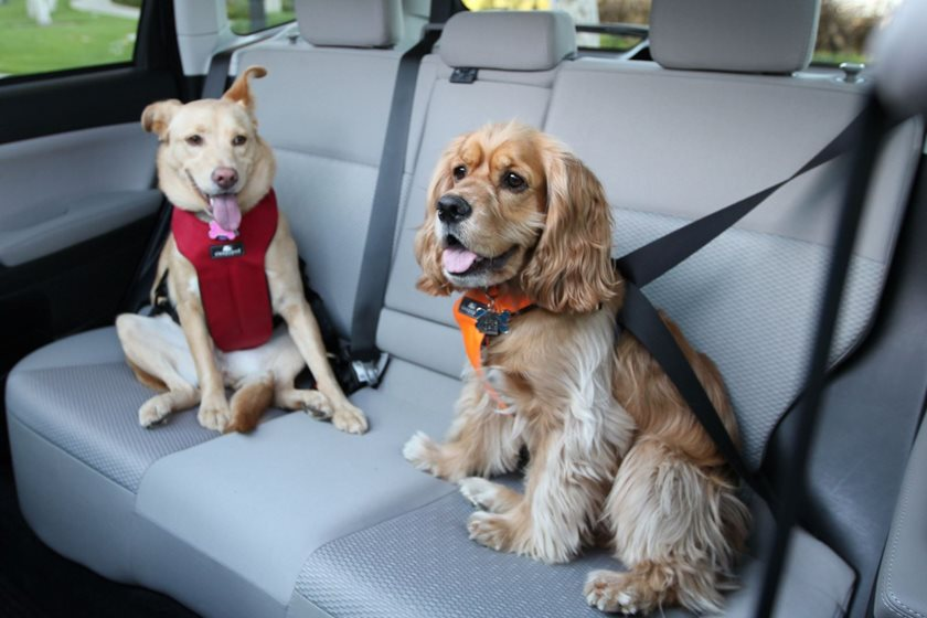 Best Cars For Dog Owners Carbuzz