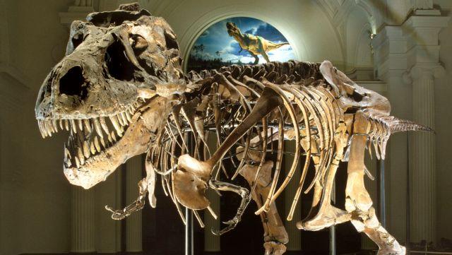 Hasil gambar untuk dinosaur fossil