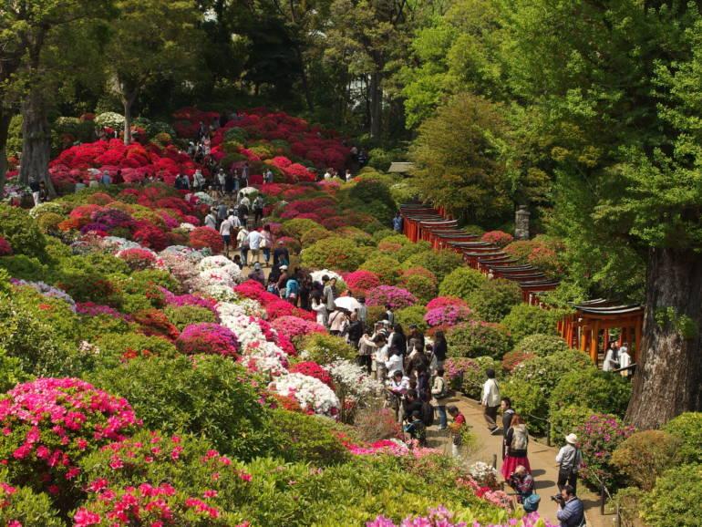 6 Tokyo Flower Festivals To Visit This Spring Tokyo Cheapo