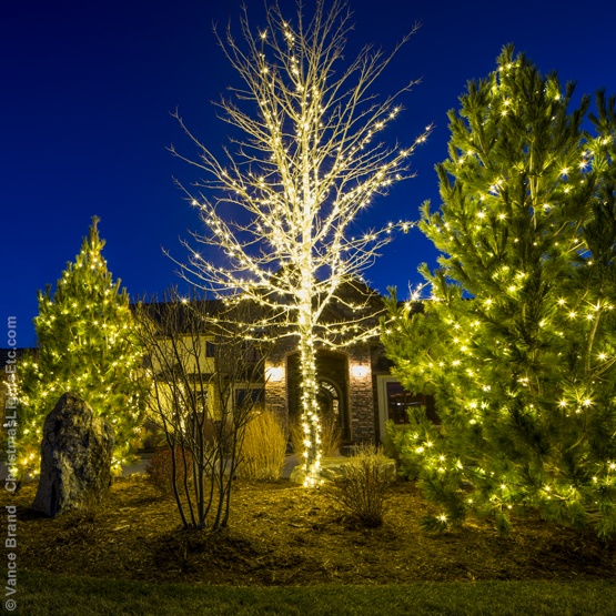 How To Wrap Tall Tree With Christmas Lights