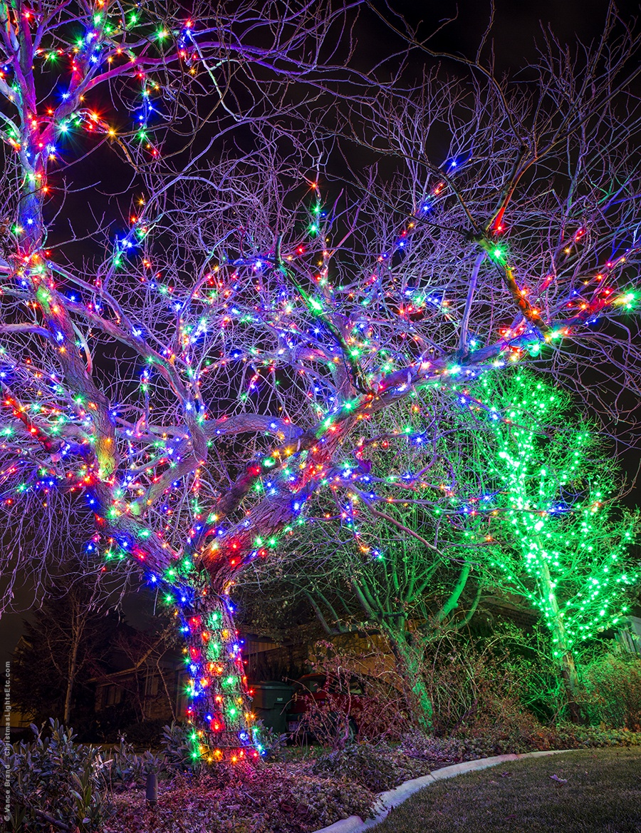 hight resolution of multicolor led light wrapped tree for christmas