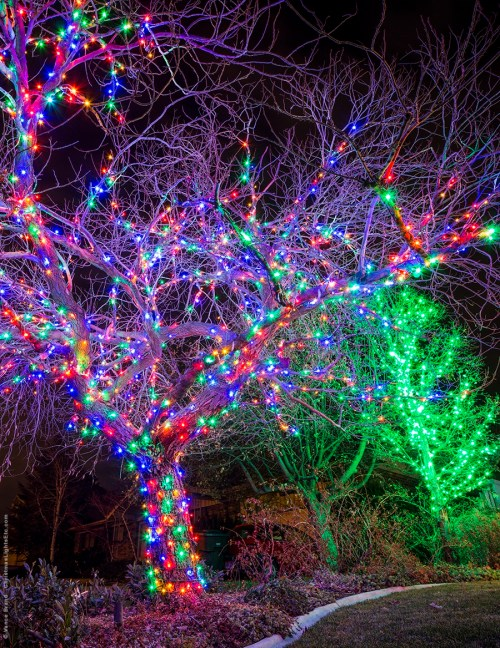 small resolution of multicolor led light wrapped tree for christmas