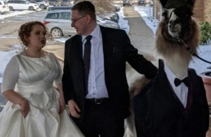 Fue con una llama en esmoquin al casamiento de su hermana por una promesa...¡y se hizo viral!