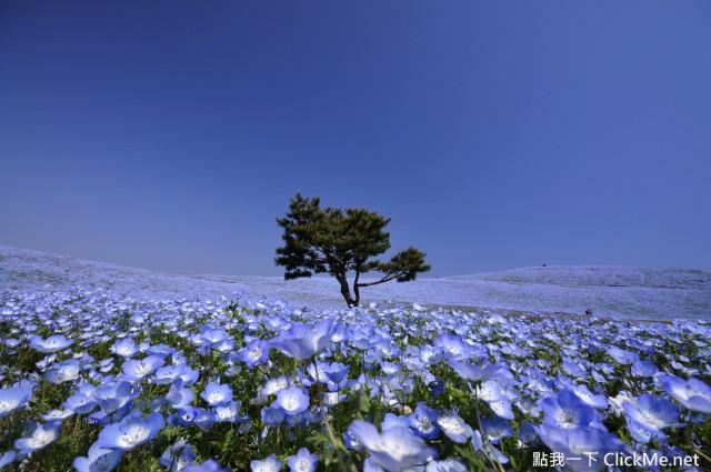 日本《絕美的7個藍色風景》 完全就是人間仙境! | 點我一下