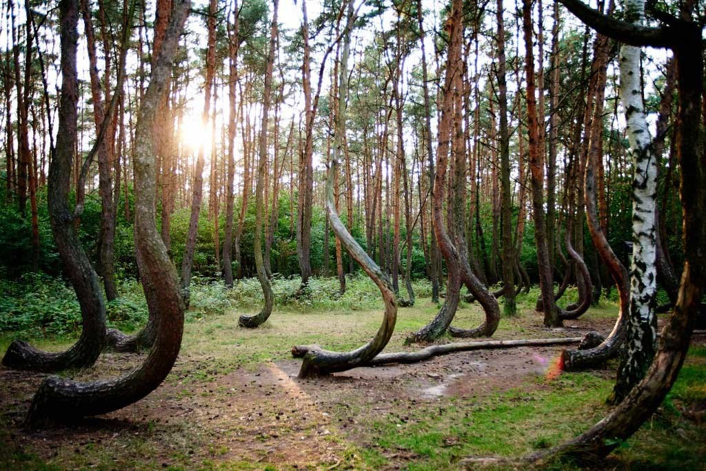 Hoia-Baciu-The-Mysterious-Forest-Interesting-Trees-Ghosts-Legends-1024x683.jpg