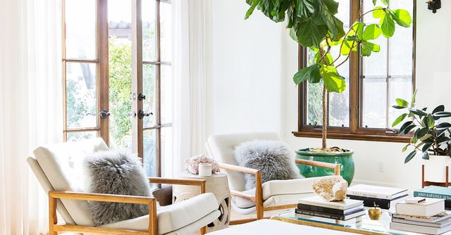 How To Decorate With Large Indoor Plants In Every Home