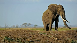 'Queen of Ivory' arrested in Tanzania