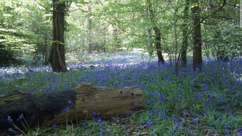 """<strong>Naboo (Whippendell Woods, near Watford, UK): </strong>The tranquil glades of <a href=""""http://cassioburypark.info/whippendell-wood/"""" target=""""_blank"""">Whippendell Woods</a>, just outside London, are the setting for one of the most controversial scenes in """"Star Wars."""" It's where the widely lambasted character of Jar Jar Binks makes his debut."""