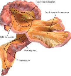 the mesentery a new organ you didn t know you had [ 1600 x 900 Pixel ]