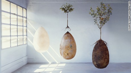 biodegradable burial pod turns
