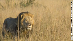 Two years after Cecil the lion's death, son Xanda killed by game hunter