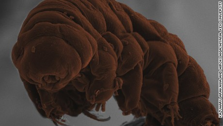 The microscopic critter that can survive almost anything
