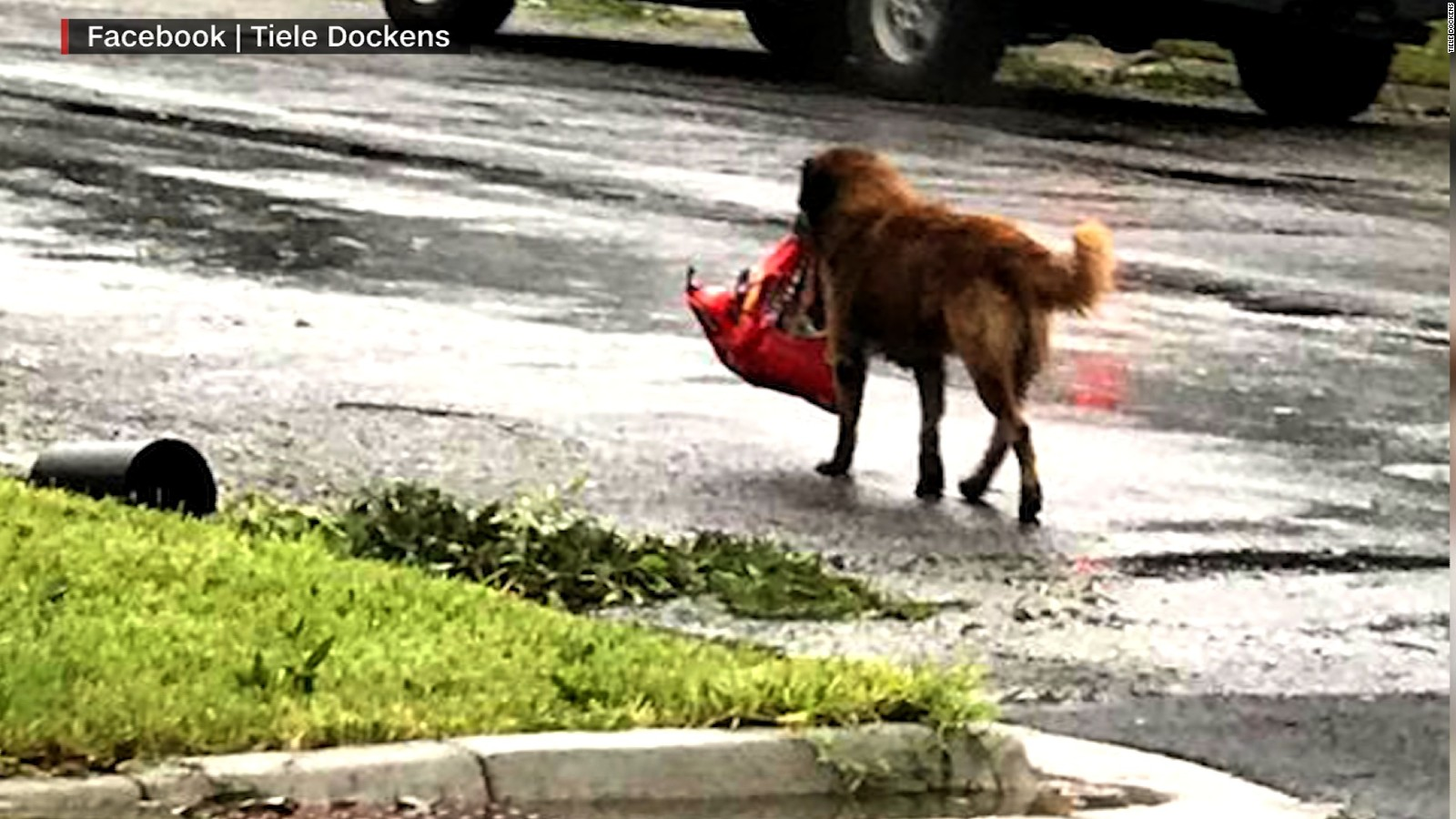 https://i0.wp.com/cdn.cnn.com/cnnnext/dam/assets/170828202247-otis-dog-hurricane-harvey-viral-picture-ebof-00004503-full-169.jpg