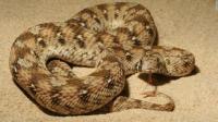 "Nigerian clerk: ""I didn't say snake swallowed $100,000"" - CNN"
