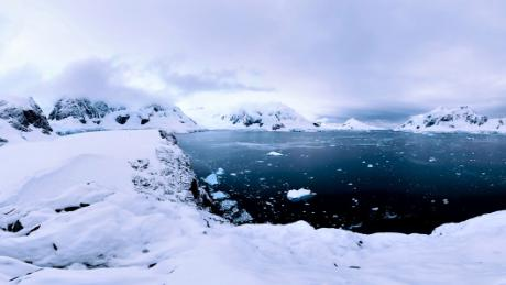 Penguins, Seals, and Krill: Antarctica's fragile food chain
