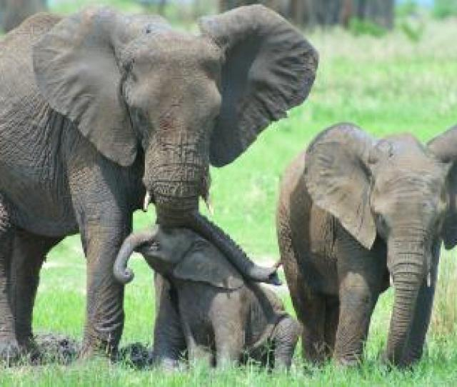 Researchers Studied A Baby Elephant To Learn More About Their Protective Skin