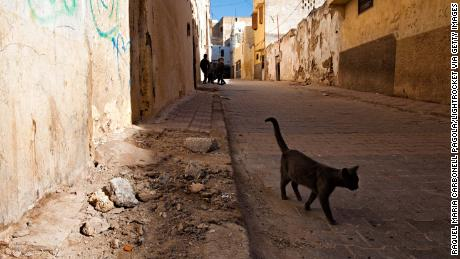 Briton dies of rabies after getting bitten by a cat in Morocco