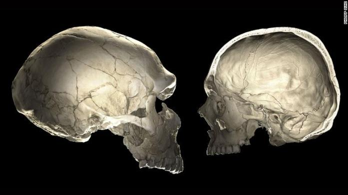One of the features that distinguishes modern humans (right) from Neandertals (left) is a globular shape of the braincase.