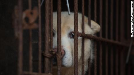 A dog looks out from a cage at a dog farm during a media visit organised by the Humane Society International (HSI) in Wonju, south East of Seoul on April 27, 2016.