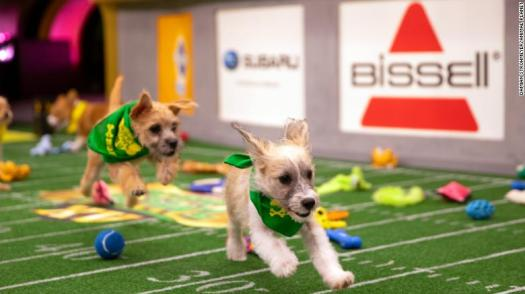Puppy Bowl 2019 Live Stream - Puppy And Pets