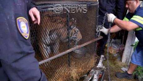 They went to an abandoned house to smoke grass. Inside, they found a tiger.