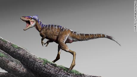 Tiny tyrannosaur fossil discovery changes the dinosaur timeline