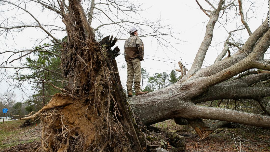 A young man stands on a tree that was uprooted in Beauregard.