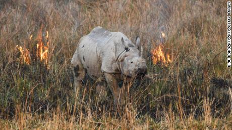 One million species threatened with extinction because of humans