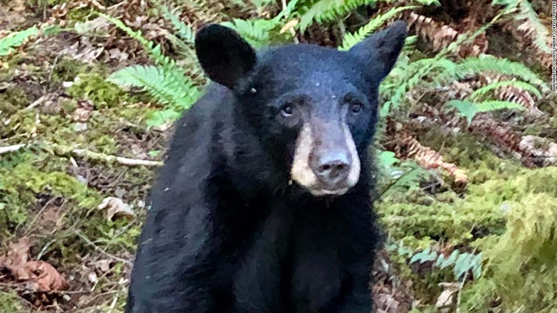 a friendly black bear