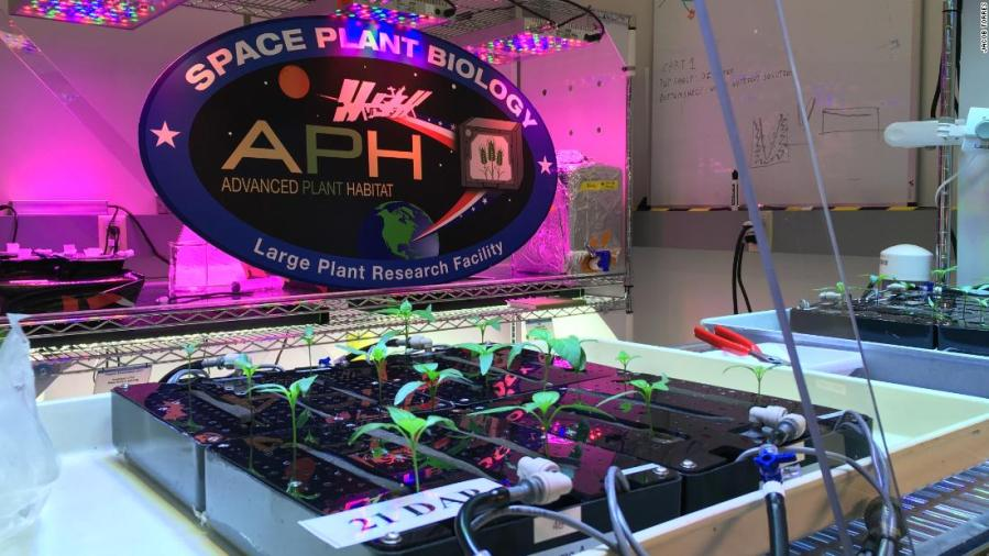 Space-grown lettuce is safe to eat, says study. Delicious, say astronauts 11