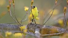 The majority of birds in North America are threatened with extinction. Here's what we can do
