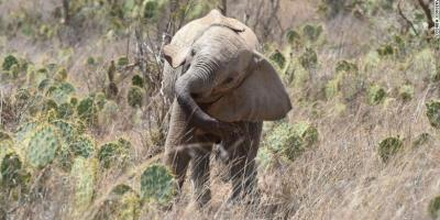 Africa Sustainable Conservation News – News, analysis and