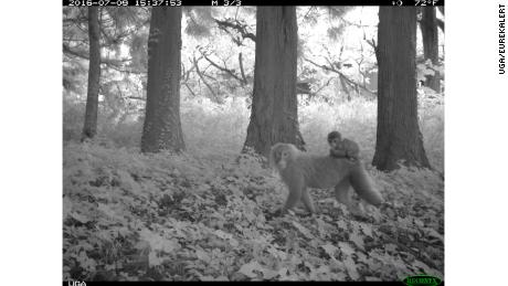 Researchers captured images of more than 20 species, including macaque monkeys, in the areas surrounding the plant.