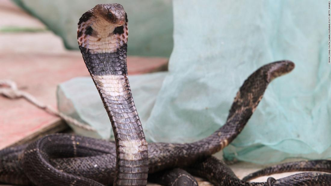 Snakes could be the original source of the new coronavirus ...