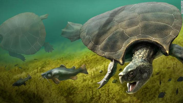 An artist's illustration of the giant turtle Stupendemys geographicus.