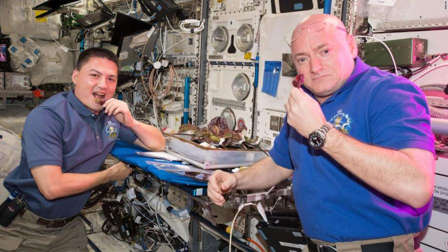 Space-grown lettuce is safe to eat, says study. Delicious, say astronauts 6