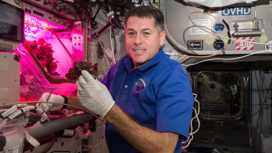 Space-grown lettuce is safe to eat, says study. Delicious, say astronauts 12